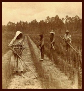 rice_field_slaves_366_400
